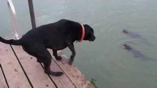 Catfishing Doggie Style