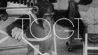 Download Lagu Dzeko & Torres vs Crossways - Togi [Monstercat Official Video] Mp3