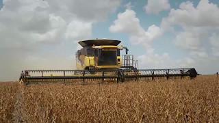 Capa do vídeo Área de plantio de trigo recua no Paraná