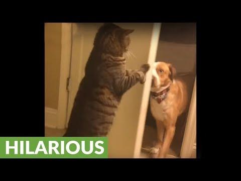 il-gatto-che-chiude-fuori-il-cane