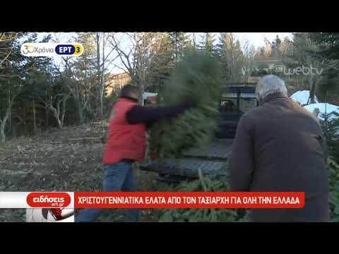 Χριστουγεννιάτικα έλατα από τον Ταξιάρχη της Χαλκιδικής | 14/12/2018 | ΕΡΤ