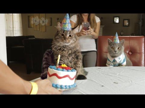 un buon compleanno coi fiocchi! - micioauguri divertenti -
