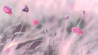 3 HOURS Best Relaxing Music | Romantic Piano | - Background - Spa - Music Therapy - Love