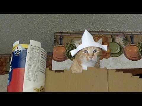 "Cats Reenact Monty Python's ""The Coconut Scene"""