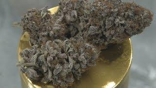 Black Dosi Fire Marijuana Monday by Urban Grower