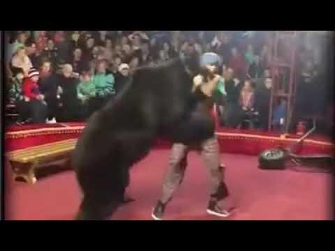 ARREPIANTE: Urso ataca treinador durante apresentação em circo