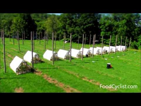 Moving Chicken Tractors (Time Lapse)