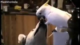 תוכי מאכיל כלב