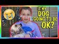 Download Lagu IS MY DOG GOING TO BE OKAY?   We Are The Davises Mp3 Free