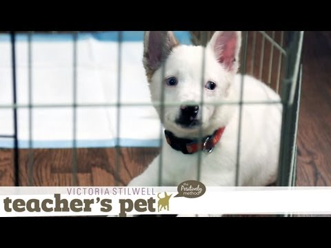 eHowPets - Follow eHow Pets for regular tips from Victoria Stilwell and more: http://www.youtube.com/subscription_center?add_user=ehowpets Today, I show you how to teac...