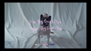 Download Video Colde (콜드) - Your Dog Loves You (Feat. Crush) (Official Video) MP3 3GP MP4