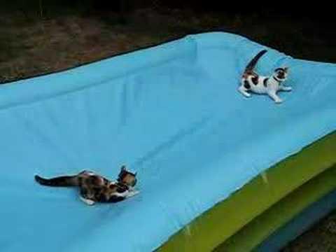 mici-che-giocano-in-piscina-239