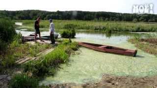 Экологическая катастрофа в Масловке