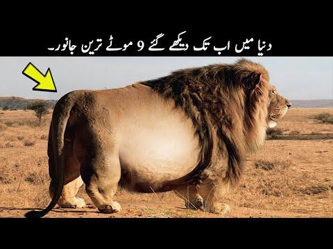9 FATTEST Wild Animals Ever Seen | TOP X TV