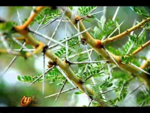 Video ennai sumapathinaal iraiva - tamil christian songs download in MP3, 3GP, MP4, WEBM, AVI, FLV January 2017