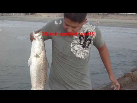 Galveston Jetty Fishing – 28″ Gator Speckled Trout