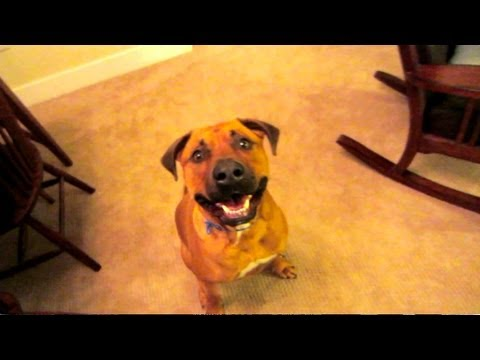 FUNNY JOKES TO CHEER UP DOG – Life After College Vlog: Ep. 149
