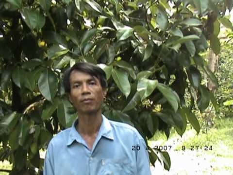 สวนครูมิตร อ.ท่าใหม่ จันทบุรี ใช้ยักษ์เขียวลดต้นทุนปุ๋ยเคมีได้กว่า 50%