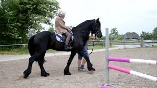 Paarden wens