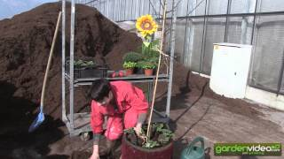 #236 Lady in red - how to plant an appletree in a pot