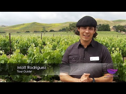 Visit the best Santa Ynez Valley wineries.