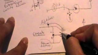 NEUROANATOMIA 2.0: TRACTOS ASCENDENTES DE LA MEDULA ESPINAL: DOLOR (2)