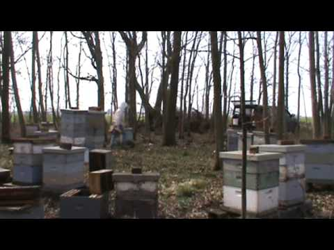 Commercial Beekeeping Operation Installing Packages In A Second Apiary. Part 2