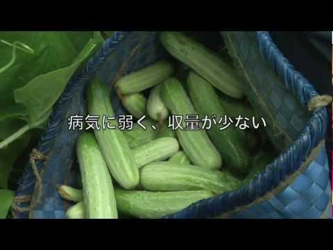 『よみがえりのレシピ』~8月9日(金)終了
