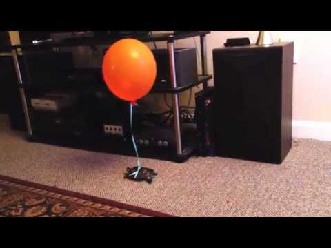 How to not lose your pet turtle as he roams around the house balloon on a