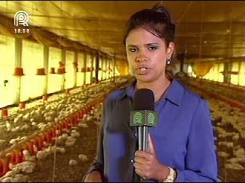 O Brasil está preparado para enfrentar a gripe aviária, afirma o MAPA