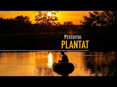 Pescuitul plantat