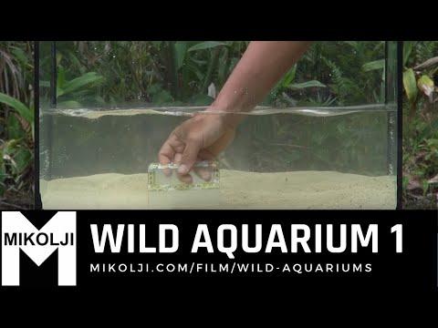 WILD AQUARIUM 1_Akvárium. Legeslegjobbak