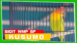Video [EXCLUSIVE] KUSUMO - The Legend of Love Bird Indonesia MP3, 3GP, MP4, WEBM, AVI, FLV September 2018