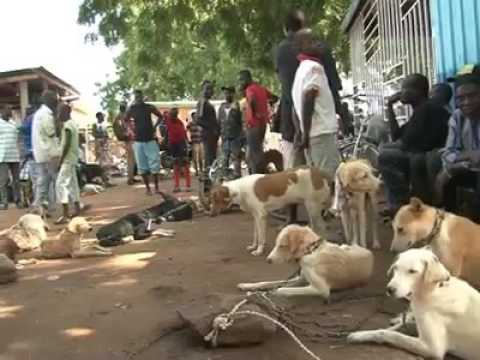 Dog Meat Eaten In Africa