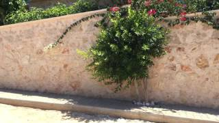Kalkan Turkey  City new picture : Kalkan Walk - Kalkan, Turkey June 2016