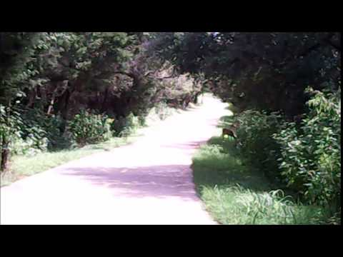 deer on the trail (видео)