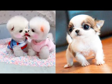 Baby Dogs - Cute and Funny Dog Videos Compilation #3 | Aww Animals