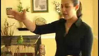 Caring For Parakeets : Wing Clipping In Parakeets