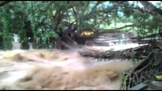 TOPIKINI.COM - Hujan lebat yang melanda Pesisir Selatan sejak Rabu malam, hingga Kamis pagi (05/01/2017), mengakibatkan air sungai Batang Bayang di kabupaten Pesisir Selatan meluap. Akibatnya jembatan akar yang merupakan ikon wisata di kabupaten tersebut nyaris putus. Jembatan dihantam air sungai yang datang seperti air bah.Baca Selengkapnya disini: http://topikini.com/objek-wisata-jembatan-akar-nyaris-putus-dihantam-air-sungai/