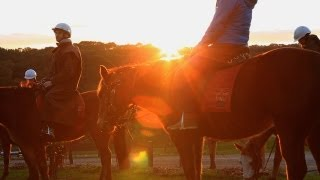Mornington Peninsula Australia  city pictures gallery : Horseback Winery Tour, Mornington Peninsula Melbourne Australia