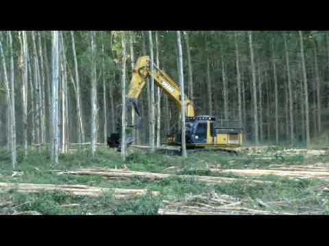 Extração de Eucalipto para Celulose