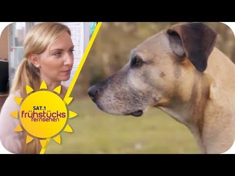 Tierheilpraktiker in Deutschland: Nur Betrug und Geld ...