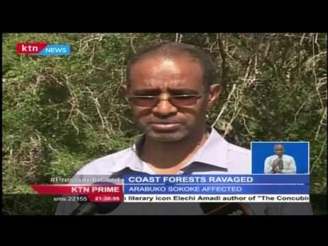 The Coastal, Mijikenda Kaya's and Arabuko Sokoke are under threat from illegal loggers