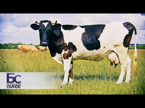 Правда о молоке   Большой скачок (видео)