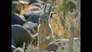 Вижте най-смешното озвучаване на животни!!!