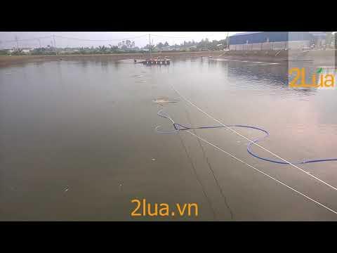 Lắp đặt sục khí ao cá | Lắp đặt máy tạo oxy nuôi cá