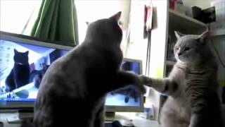 Cats Playing Patty-Cake :))
