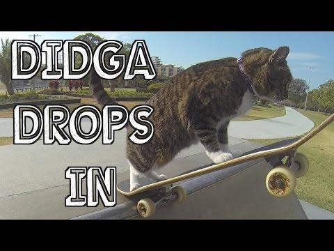 Chú mèo trượt ván patin