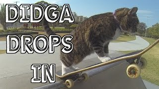This Skateboarding Cat Can Ride Like A Pro!