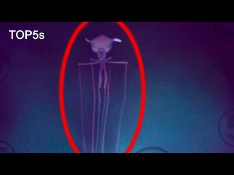 5 Extraordinary Sea Creatures That Will Blow Your Mind